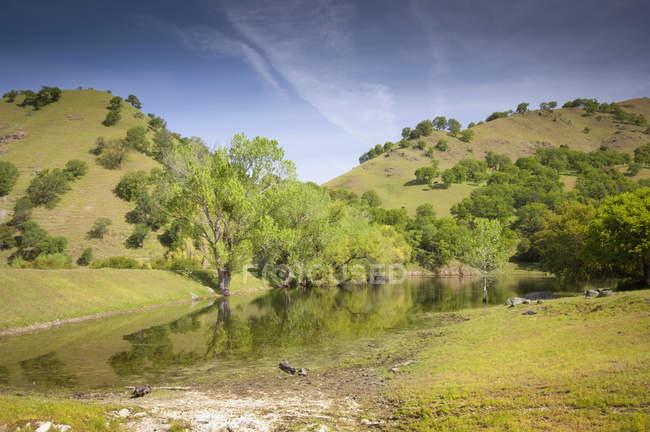 Вид на зеленую траву — стоковое фото