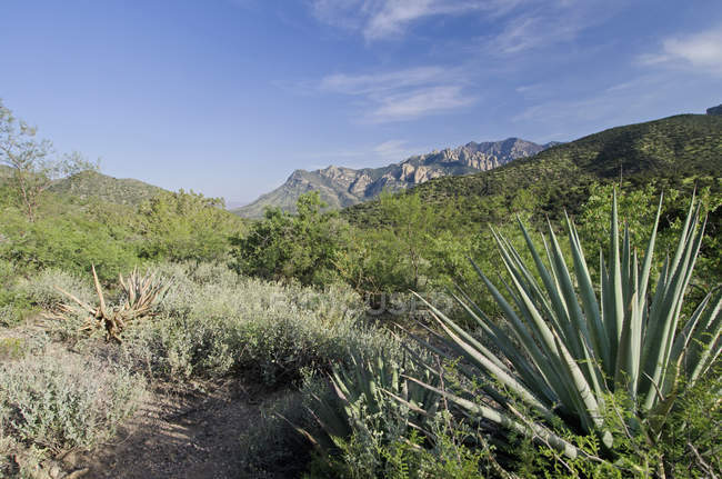 Vue du champ de la montagne — Photo de stock