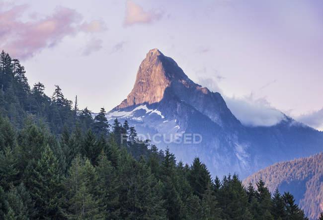 Вид на горы и лес — стоковое фото