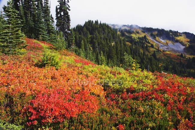 Schöne Herbst Farben — Stockfoto