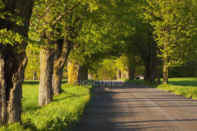 Estrada rural no verão — Fotografia de Stock