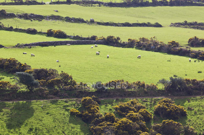 Paisagem e terras agrícolas — Fotografia de Stock