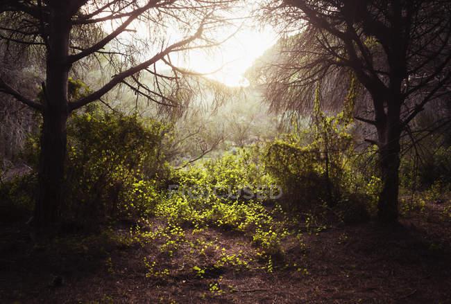 Luz del sol brillando entre los árboles - foto de stock