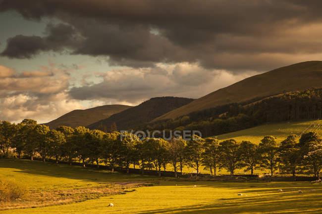 Goldene Landschaft unter dem Himmel — Stockfoto