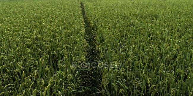 Путь через поле — стоковое фото