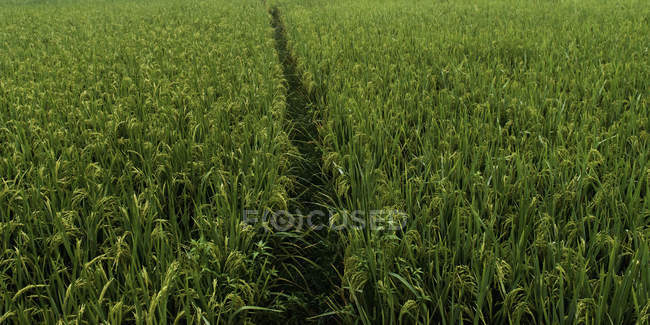 A path through a field — Stock Photo