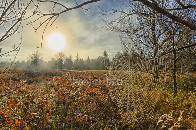 Spiderweb covered in dew — Stock Photo