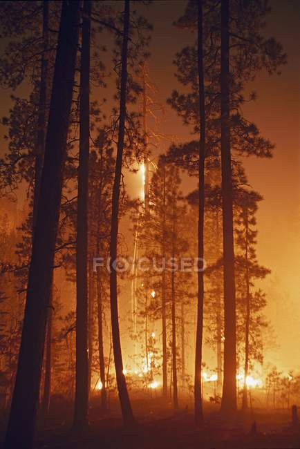 Prescribed Fire Burning — Stock Photo