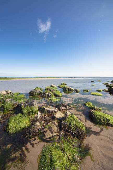Песчаный пляж с растения и камни — стоковое фото