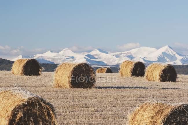 Седые тюки и горы — стоковое фото