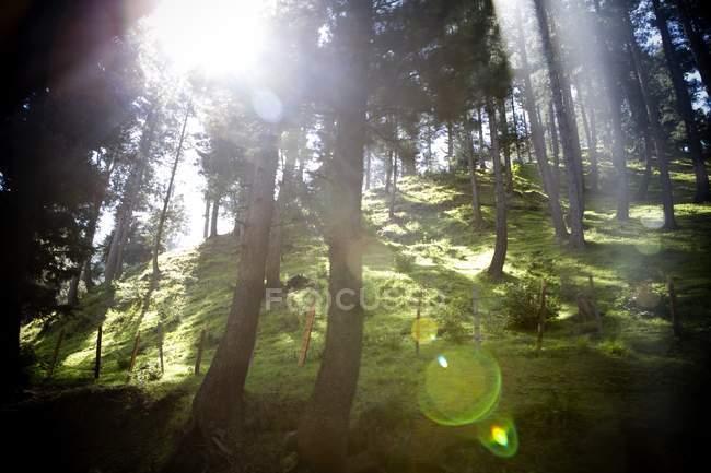 Sol brillando en el bosque - foto de stock