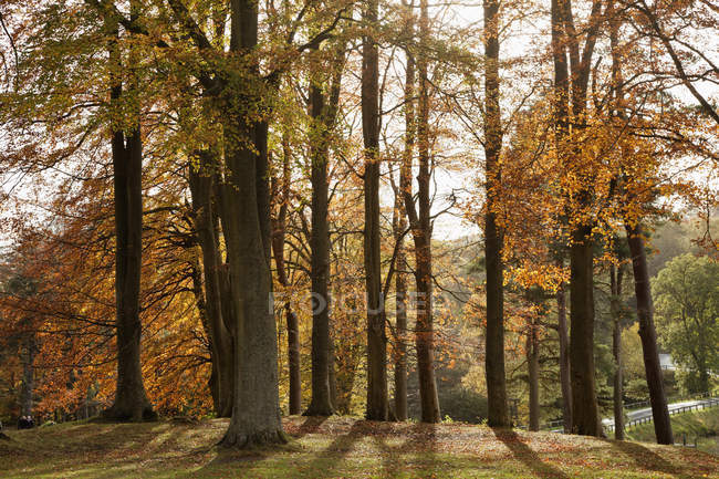 Trees In Autumn Colours — Stock Photo