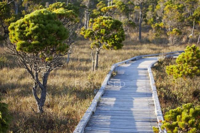 Sentier de promenade en cèdre sur le sentier Shorepine Bog — Photo de stock