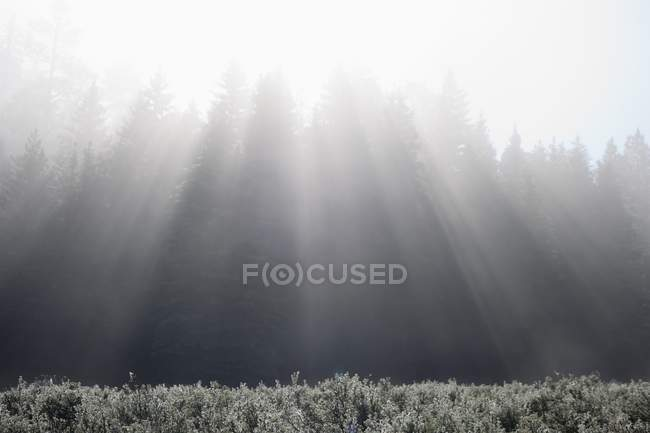 Sunbeams Formed In Fog Over Mountain — Stock Photo