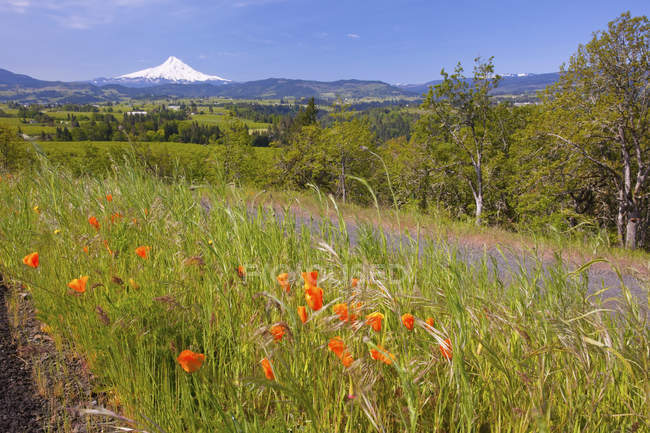 Wildflowers Growing In Field — Stock Photo