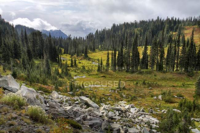 Forest on montain valley — Stock Photo