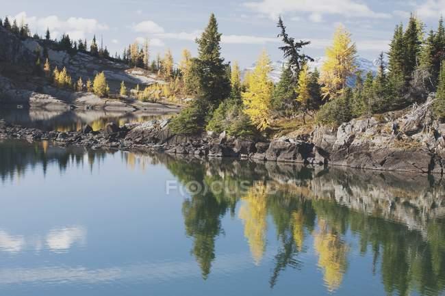 Модрина дерева роздуми восени — стокове фото