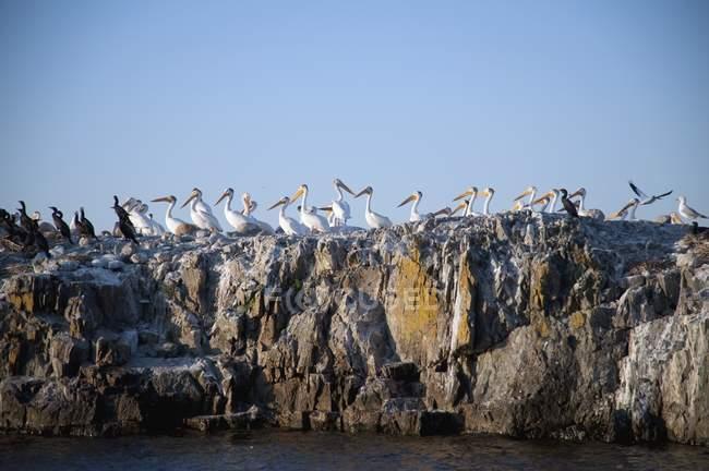 Чайки, расположенный на скале — стоковое фото