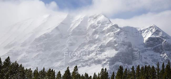 Заснеженная гора над лесом — стоковое фото