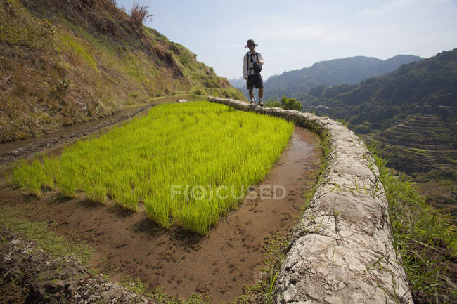 Mud-Walled Rice Terraces — Stock Photo