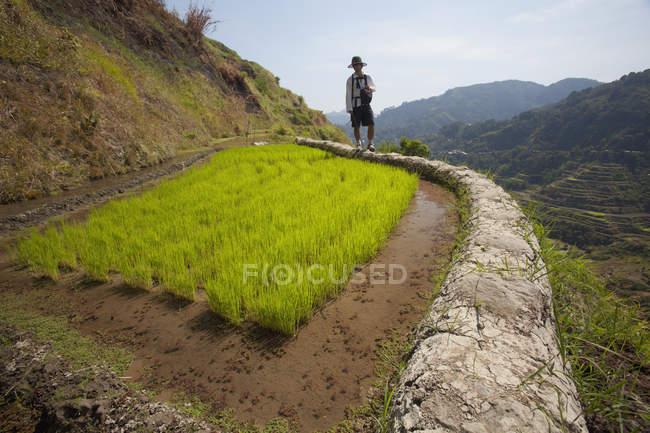 Terraços de arroz paredes de lama — Fotografia de Stock