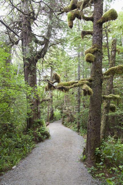 Сценарий Along Wild Pacific Trail — стоковое фото