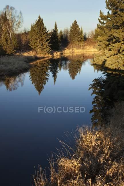 Arbres reflétés dans l'étang de campagne — Photo de stock