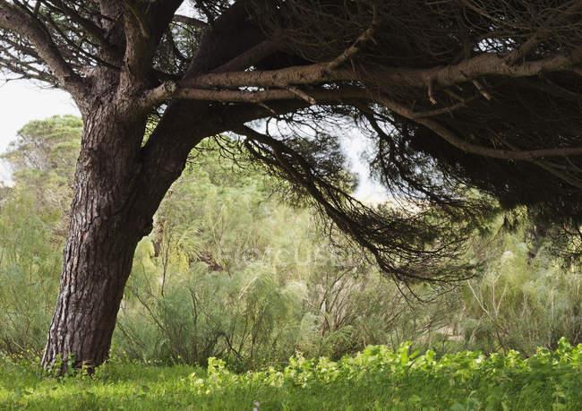 Grandes usines d'ombre d'arbre ci-dessous — Photo de stock