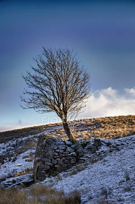 Arbre près de la structure en pierre dans un paysage enneigé — Photo de stock