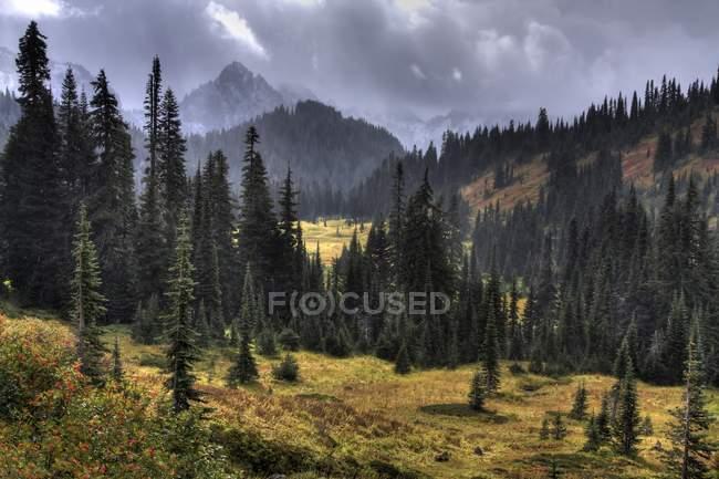 View of Mount Rainier — Stock Photo