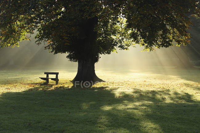 Lone Tree In Mist And Sunlight — Stock Photo