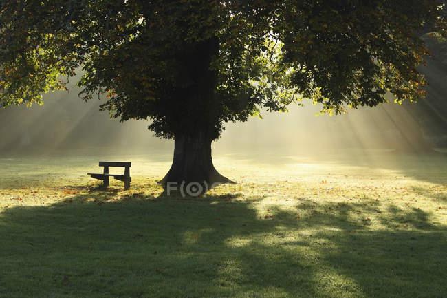 Albero solitario nella nebbia e luce del sole — Foto stock