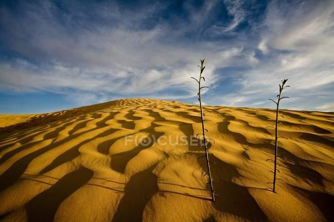 View of Sahara Desert — Stock Photo