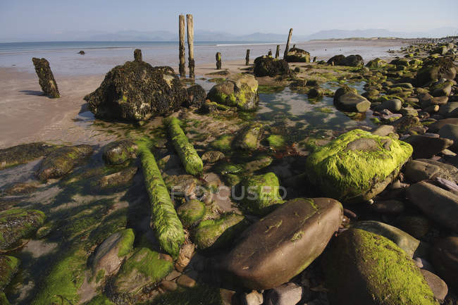 Algen und Felsen am Strand — Stockfoto