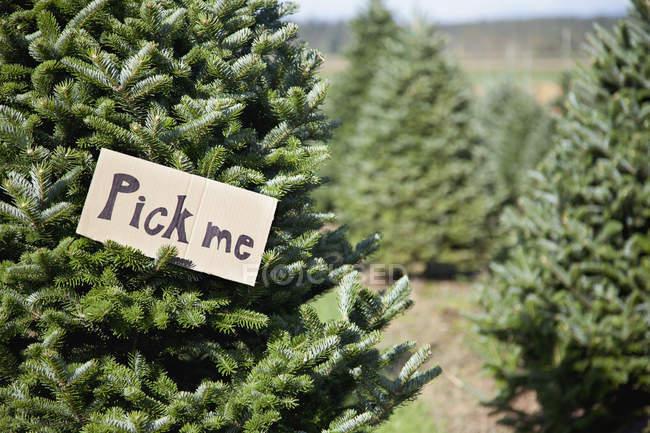 Weihnachtsbaum auf dem Bauernhof — Stockfoto
