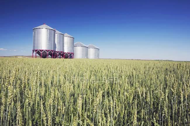 Металлические зерновые контейнеры — стоковое фото