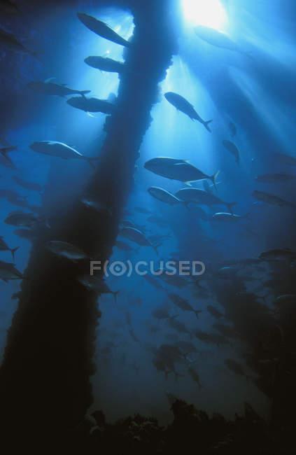 Fische auf Durchreise — Stockfoto