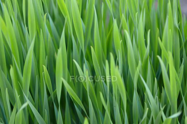 Blades Of Grass outdoors — Stock Photo