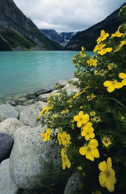 Lago louise, parco nazionale di banff — Foto stock