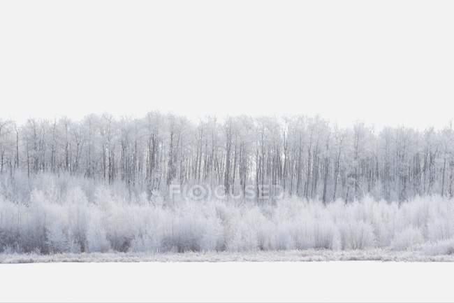 País das Maravilhas Branco com árvores — Fotografia de Stock