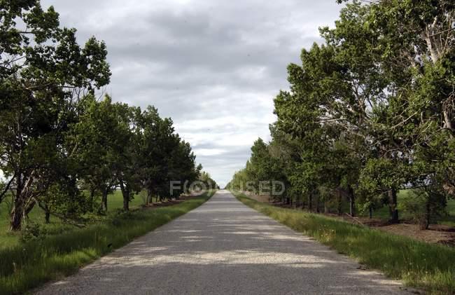 Estrada reta com árvores — Fotografia de Stock