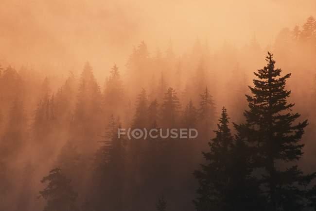 Puesta del sol a través de la densa niebla - foto de stock