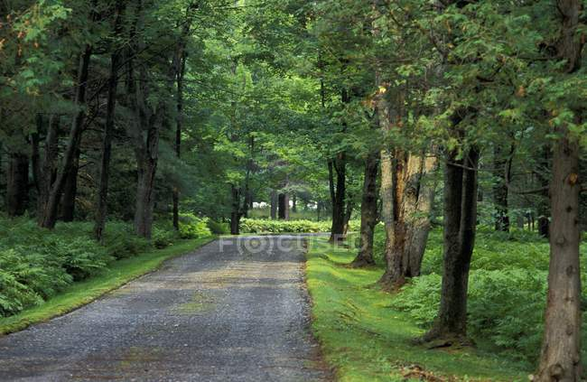 Road In Forest with trees — Stock Photo