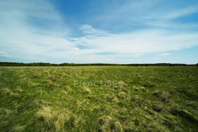 Grassland field Scenic — Stock Photo