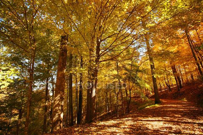 View of Forest In Autumn — Stock Photo