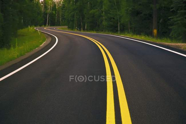 Winding Road in forest — Stock Photo