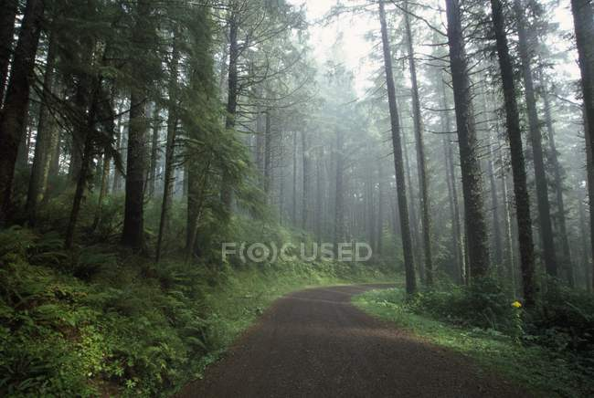 Forest Trail In Oregon — Stock Photo