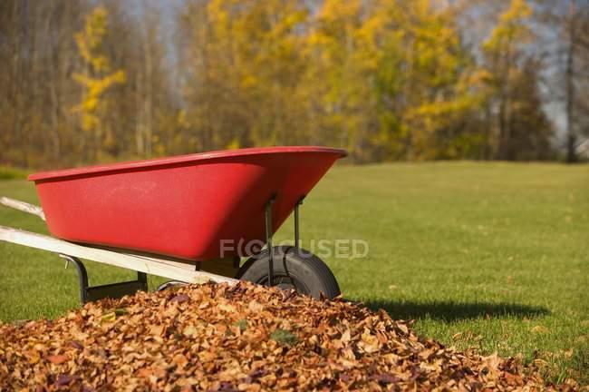 Колесная бочка рядом с кучей листьев — стоковое фото