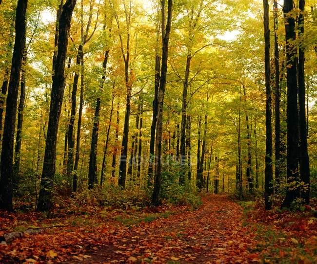 Деревья, Осенние листья в лесу — стоковое фото