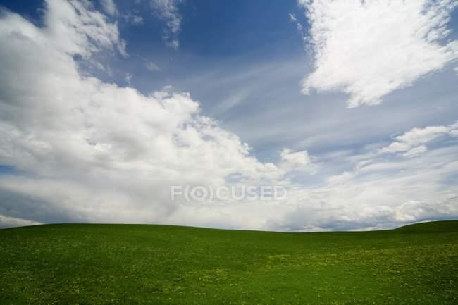 Paisaje de verde en campo - foto de stock